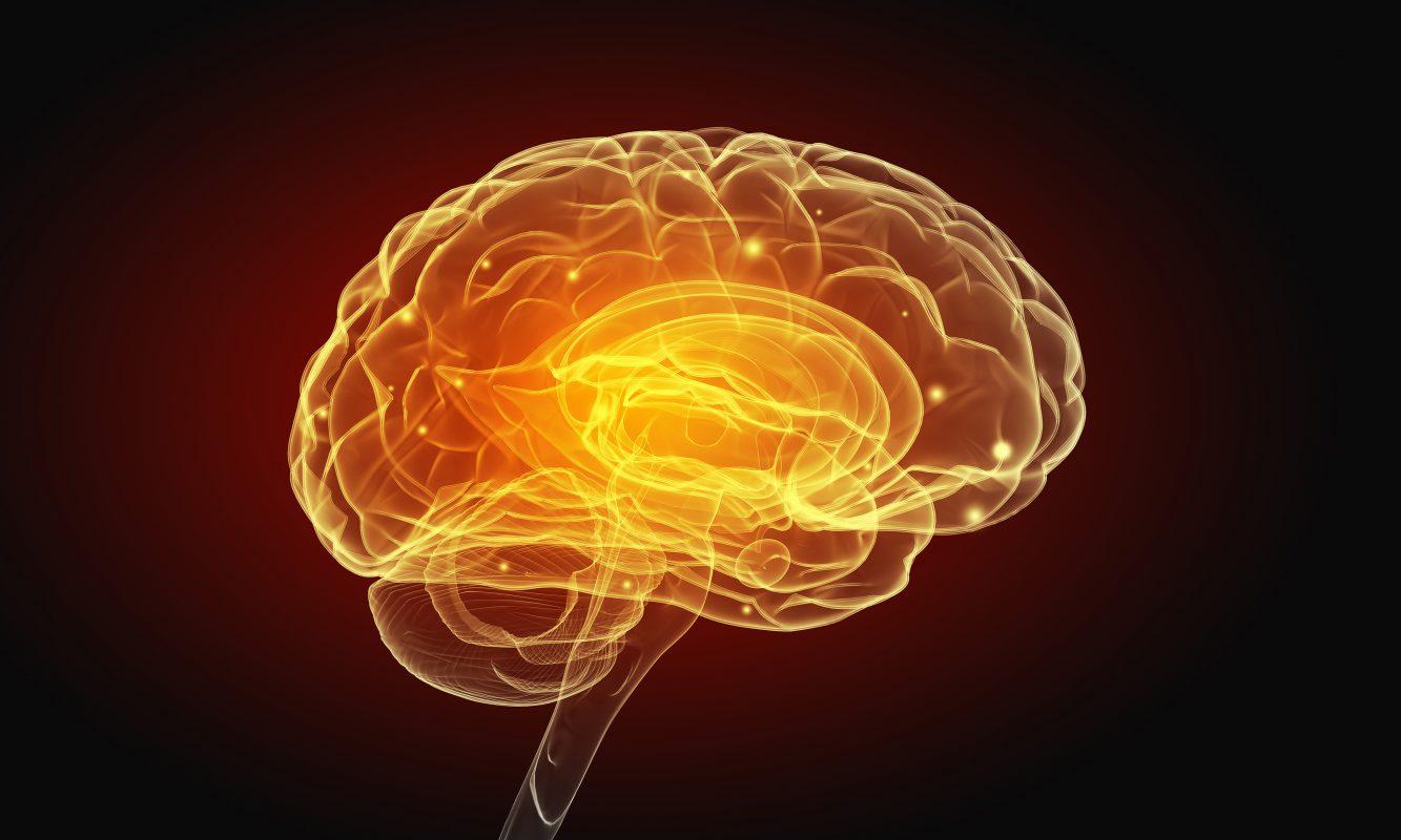 ¿Cómo aplicar la Neurociencia social en las distintas disciplinas?